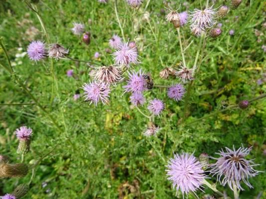 """Jardins de Vanneau :les bonnes """"mauvaises herbes"""""""