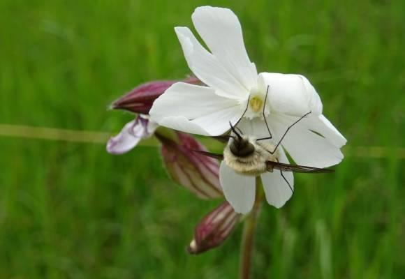 sujet d'actu:disparition des insectes
