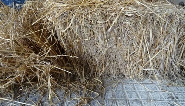 blé d'antan
